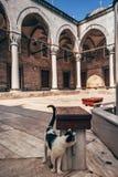 Calle Cat Hovering en Mihrimah Sultan Mosque imágenes de archivo libres de regalías