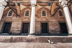 Calle Cat Hovering en Mihrimah Sultan Mosque fotografía de archivo
