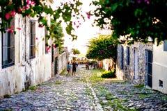 Calle Cobbled durante puesta del sol, árboles por completo de flores Imagen de archivo libre de regalías