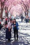Calle con la flor de cerezo en la ciudad vieja de Bonn, Alemania Imágenes de archivo libres de regalías
