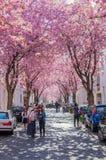 Calle con la flor de cerezo en la ciudad vieja de Bonn, Alemania Imagen de archivo