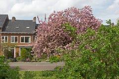 Calle con las casas en Arnhem, Países Bajos Fotos de archivo