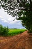 Calle de la suciedad cerca el campo de maíz del arroz Imagen de archivo libre de regalías