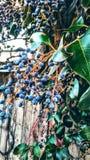Calle de la uva Fotografía de archivo libre de regalías