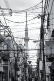 Calle de Tokio con los alambres eléctricos y el árbol del cielo Fotos de archivo libres de regalías