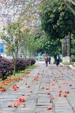 Calle del árbol de kapoc Fotos de archivo libres de regalías