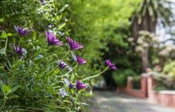 Calle del jardín Fotos de archivo