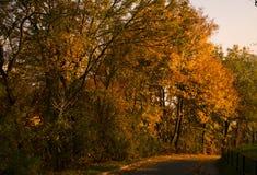 Calle del otoño Foto de archivo libre de regalías