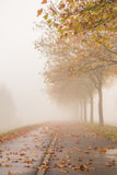 Calle del otoño con los árboles de oro Imagen de archivo libre de regalías