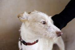 Calle del perro de caza Imagen de archivo