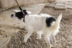 Calle del perro de caza Fotos de archivo libres de regalías