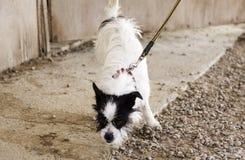 Calle del perro de caza Foto de archivo libre de regalías