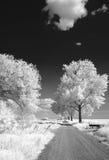 Calle en los campos Foto de archivo libre de regalías