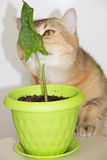 Calle et chat Images libres de droits