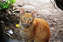 Calle linda Cat Looking At Camera fotografía de archivo libre de regalías