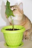 Calle och katt Royaltyfria Bilder