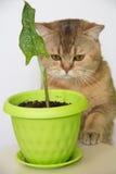 Calle och katt Arkivfoto