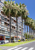 calle Palma-alineada en Puerto de la Cruz Imagenes de archivo