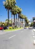 calle Palma-alineada en Puerto de la Cruz Imagen de archivo libre de regalías
