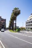 calle Palma-alineada en Puerto de la Cruz Fotografía de archivo libre de regalías