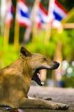 Calle sonriente del perro en la colina de la calle Imagen de archivo
