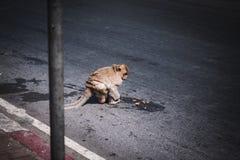 Calle Tailandia en Bangkok fotos de archivo