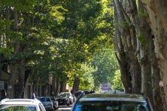 Calle verde con los árboles altos en el centro de Tbilisi, Georgia Fotos de archivo