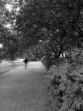 Calle verde de la ciudad Imagen de archivo libre de regalías
