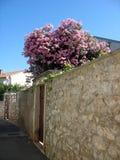 Calle vieja Imagen de archivo libre de regalías
