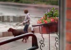 Calle y flores La visión desde la ventana Fotografía de archivo