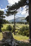 Garden of gods. So called Garden of Gods in Pollino National park, where the Bosnian pine, or Pinus Leucodermis lives, Basilicata , Italy royalty free stock photography