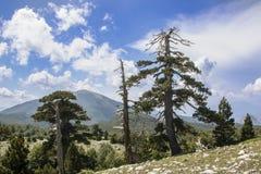 Garden of gods. So called Garden of Gods in Pollino National park, where the Bosnian pine, or Pinus Leucodermis lives, Basilicata , Italy stock photography