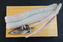 Conger pike is treated as a luxury foodstuff in Japan. This is called yubiki hamo parboiled conger pike or botan hamo peony-shaped conger pike Stock Image