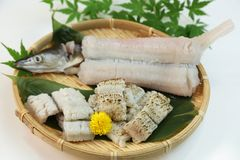 Conger pike is treated as a luxury foodstuff in Japan. This is called yubiki hamo parboiled conger pike or botan hamo peony-shaped conger pike Royalty Free Stock Photo