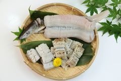 Conger pike is treated as a luxury foodstuff in Japan. This is called yubiki hamo parboiled conger pike or botan hamo peony-shaped conger pike Stock Photos