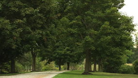 Callejón alineado árbol en el parque almacen de video