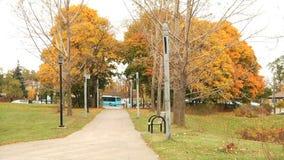 Callejón alineado árbol en el parque metrajes