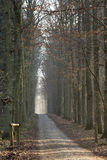 Callejón asoleado del bosque del invierno Imagen de archivo libre de regalías