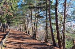 Callejón brillante y soleado con los árboles de pino en Crimea Fotos de archivo