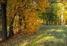 Callejón colorido del parque de la visión en otoño Foto de archivo libre de regalías