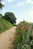Callejón con la vegetación en el parque Fotos de archivo libres de regalías