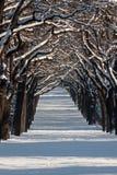 Callejón con las líneas de árboles en un paisaje del invierno Foto de archivo libre de regalías