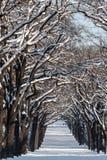 Callejón con las líneas de árboles en un paisaje del invierno Foto de archivo