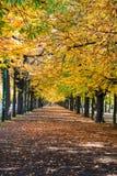 Callejón con los árboles Imagen de archivo libre de regalías