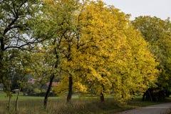 Callejón con los árboles altos con las hojas de la caída Fotografía de archivo