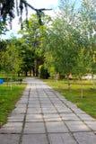 Callejón con los árboles de abedul jovenes en parque Fotos de archivo libres de regalías
