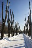 Callejón con los troncos de árbol del corte Imagen de archivo
