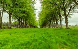 Callejón de árboles Imagen de archivo libre de regalías