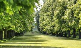 Callejón de árboles en un jardín inglés fotografía de archivo