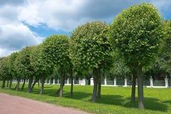 Callejón de árboles en un parque del verano Fotografía de archivo libre de regalías